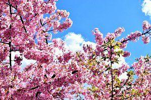 春、フランス語学校ブログ