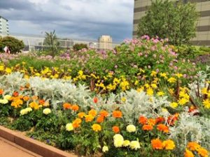 恵比寿の屋上庭園:フランス語学校のそばでリラックス